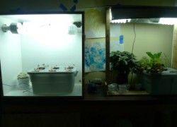 Indoor Hydroponic Herb Garden