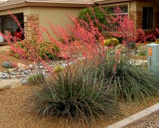 Great Design Plant: Red Yucca Spikes Dry Spots With Color. Great for a low-water yard