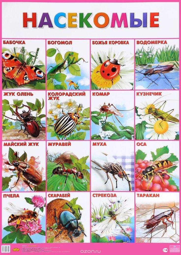 все о насекомых с картинками выбор предлагаются