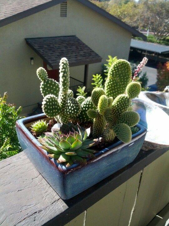 Indoor Cactus Garden Ideas Part - 25: Pinterest