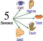 Ciao bambini: I cinque sensi Olfatto Tasto Udito Vista Gusto Per la scuola primaria e dell'infanzia