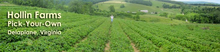 Hollin Farms - it's a hike to get out there but awesome picking summer and fall