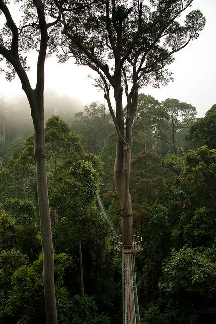 visitheworld:    Borneo Rainforest canopy walkway, Malaysia (by jamesp1989).
