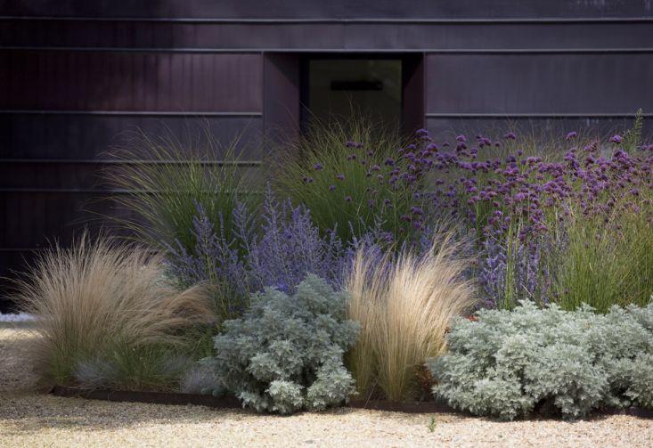 [BACKYARD GARDEN] Lavender mixed with grasses. Pea gravel surrounding. (Show Jason)