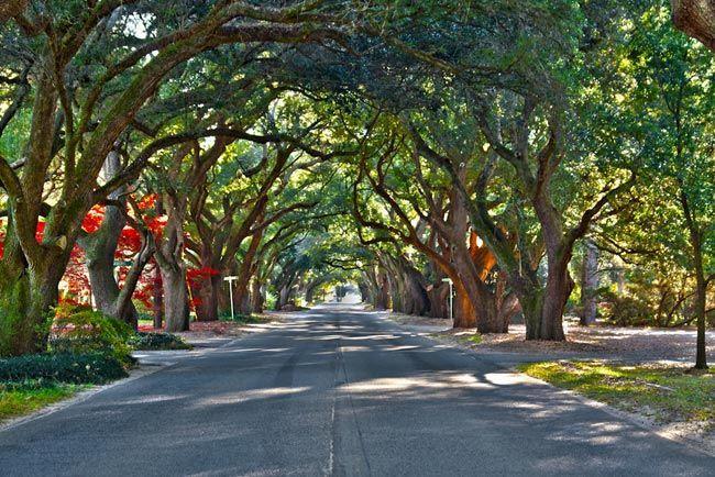 South Boundary avenue of oaks in Aiken, South Carolina