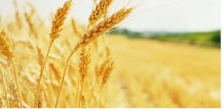 Agricoltura, associazioni con il manifesto 'Cibo per la mente'