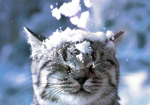 Reminds me of my cat! He also loves to be outside, although Snicks decided that the snow was a bit too cold last year..