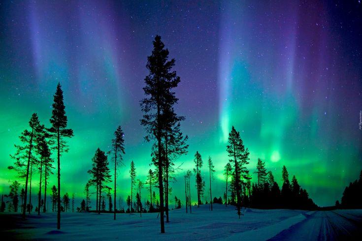 Zorza Polarna, Zima, Drzewa
