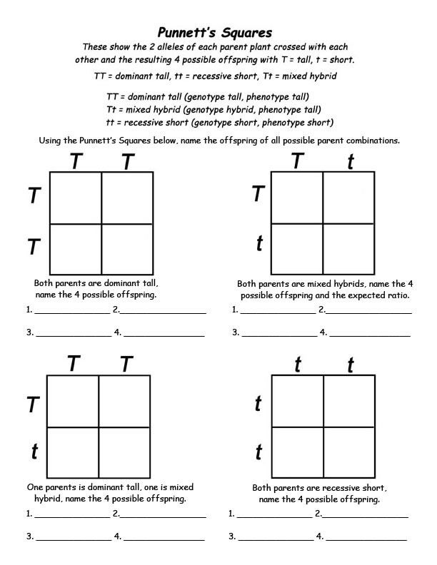 genetics info and punnett square activity for kids