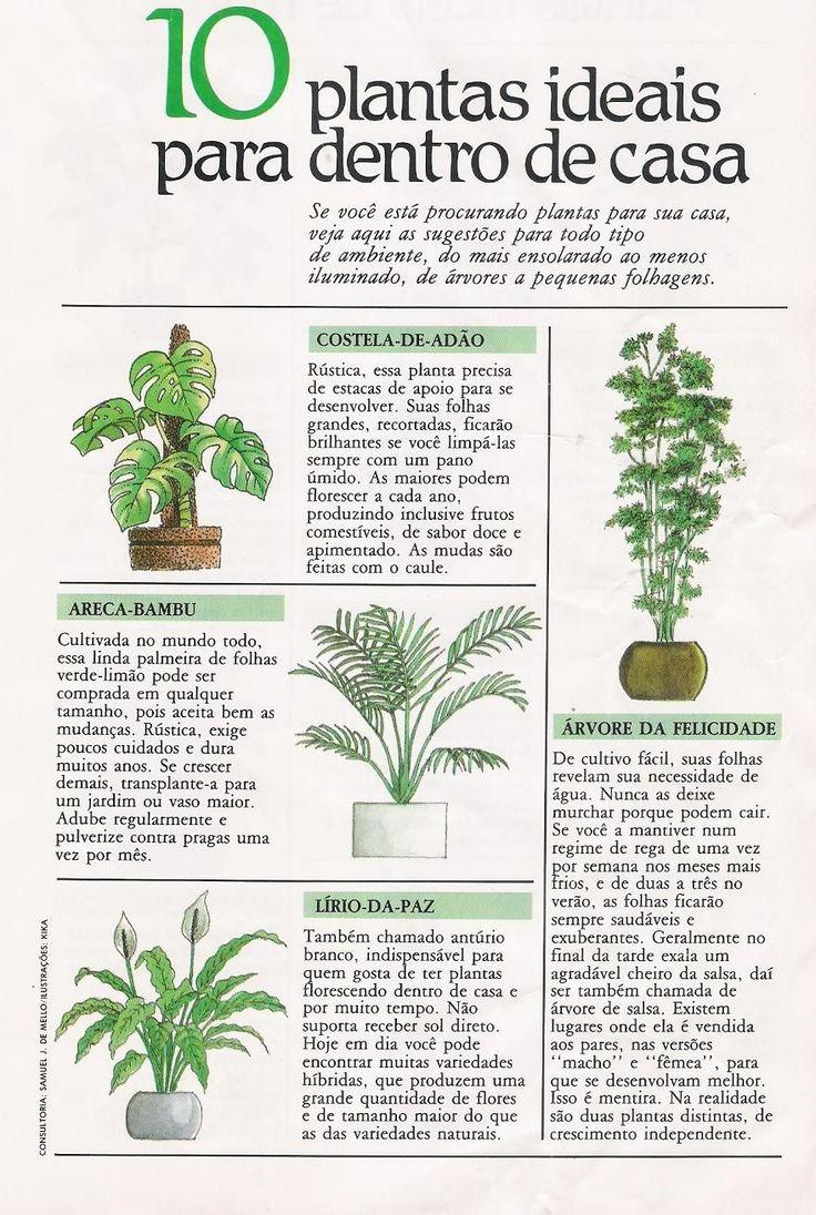 .plantas para interior. #plantasdeinterior