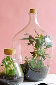mini ecosysteem - planten in een fles