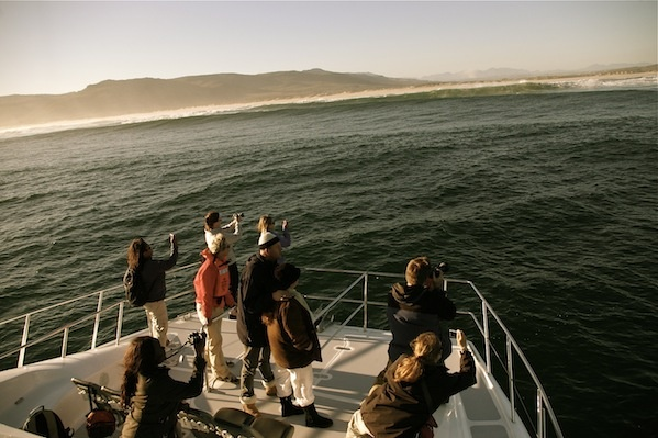 Whale Watching from our purpose built whale watching boat. www.southernrightcharters.co.za