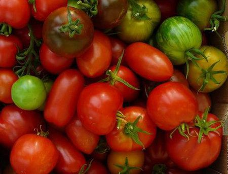 Co s nedozrálými rajčaty? 5 tipů, jak vám doma zčervenají