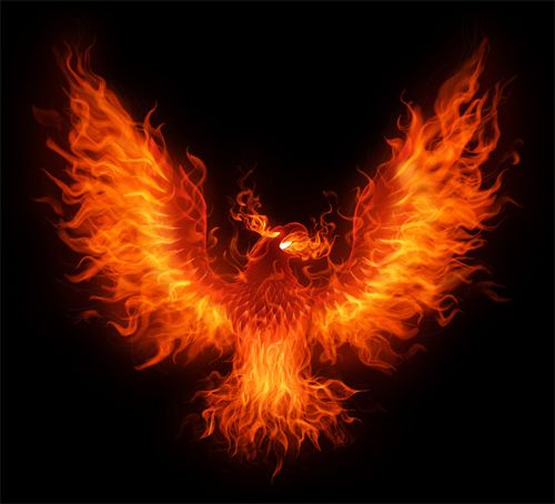 best 25 phoenix bird tattoos ideas on pinterest phoenix design a phoenix and phoenix bird images. Black Bedroom Furniture Sets. Home Design Ideas