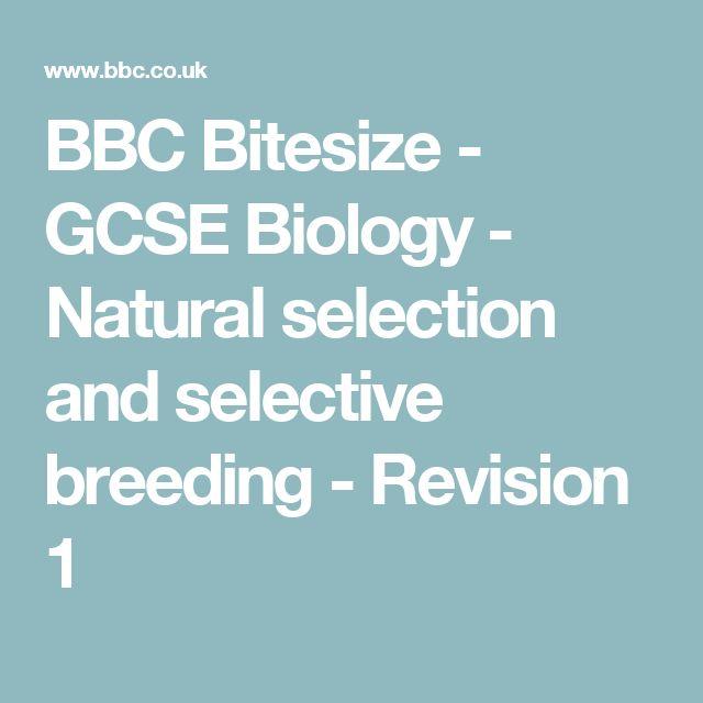 BBC Bitesize - GCSE Biology - Natural selection and selective breeding - Revision 1