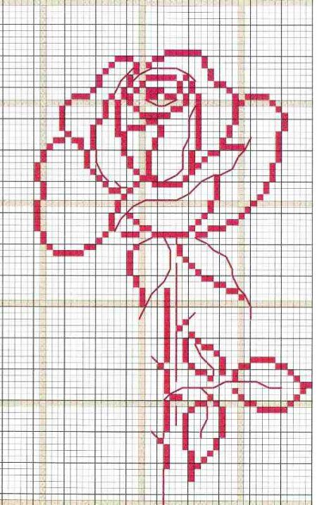 a rose for beginners
