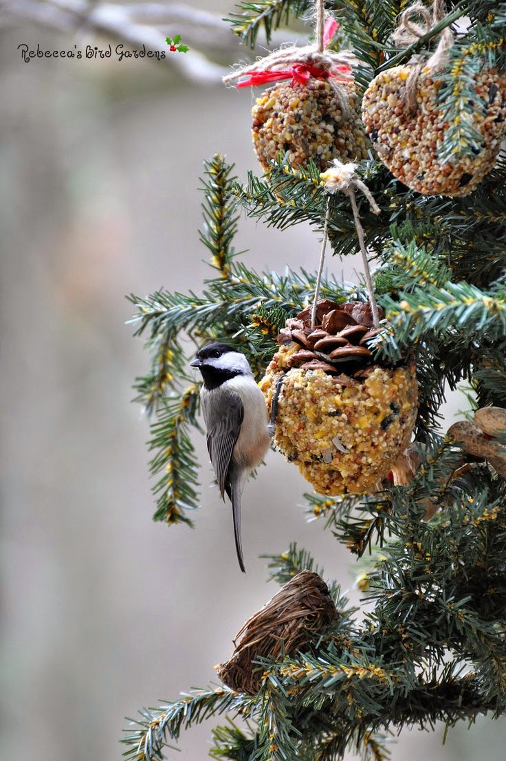 578 best christmas is for the birds and other wildlife