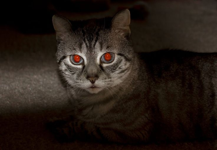 What Causes Red Eye In Photographs?