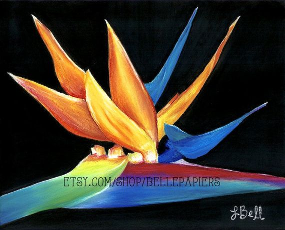 Bird of Paradise Flower Succulent Plant Tropical by BellePapiers