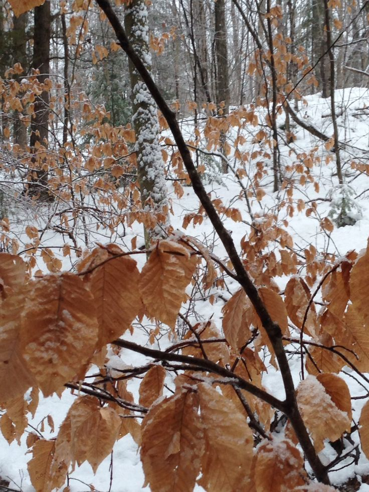Fall colours hang on after the first snowfall. #thebeave