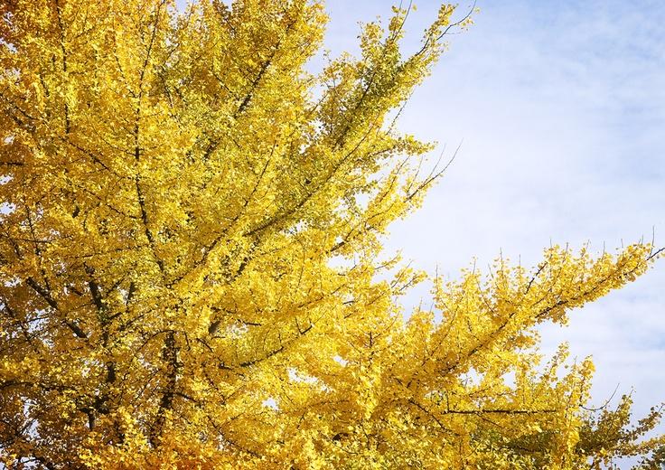 Seasonal Colors_07 by Pedro  Pinho, via 500px