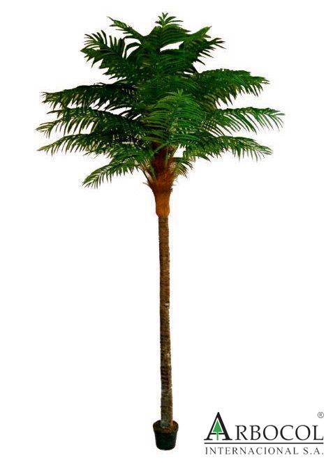 Palmera Fenix Tallo Recto 17109  $1021050    2.30 cms alto x 1.40 cms ancho