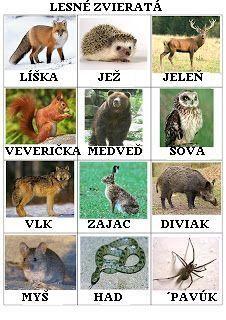 Výsledok vyhľadávania obrázkov pre dopyt lesné zvieratá pracovný list