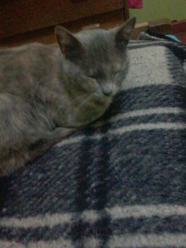 Shuchi baby hamon
