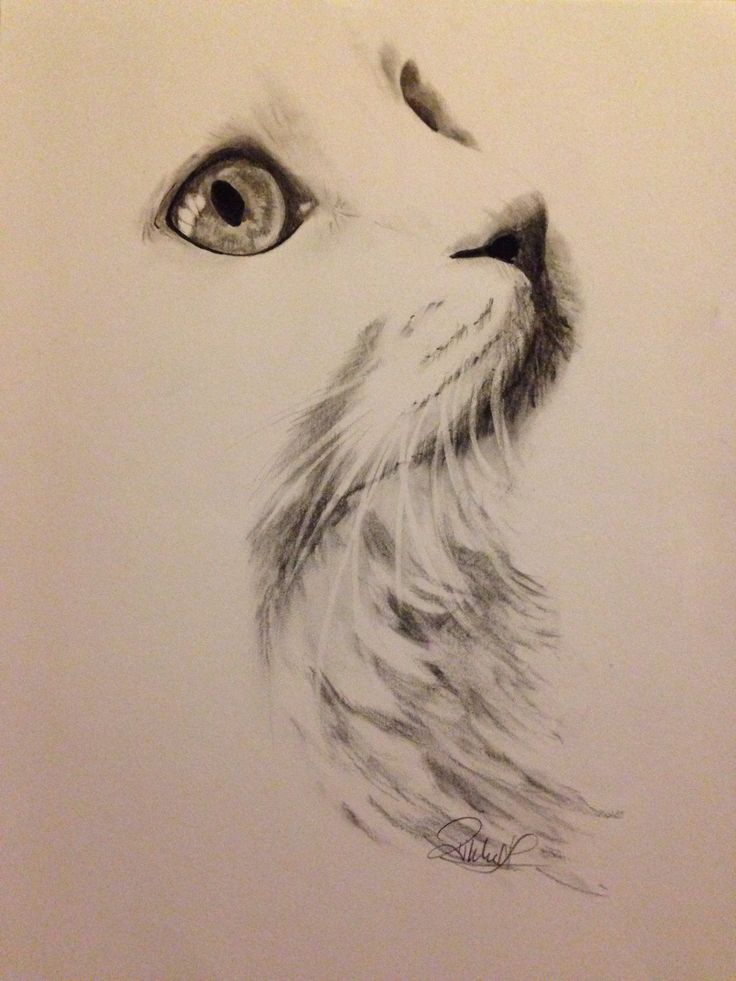 White cat charcoal drawing- was looking for tattoos, but I couldn't resist the beauty <3