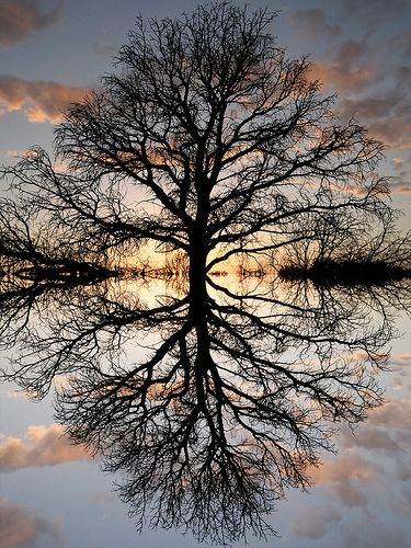 The Tree of Life by Norby Anderson: Picture, Photos, Nature, Beautiful, Art, Trees, Reflections, Tree Of Life, Photography