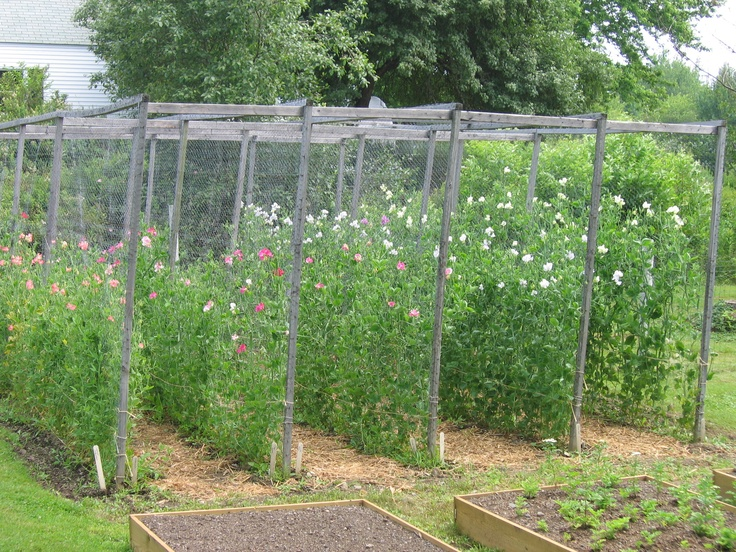 One of our small beds