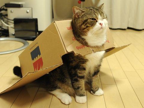 Is it a bird? is it a plane? No it's ...a cat in a cardboard box...