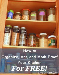 1000 ideas about Pantry Moths on Pinterest