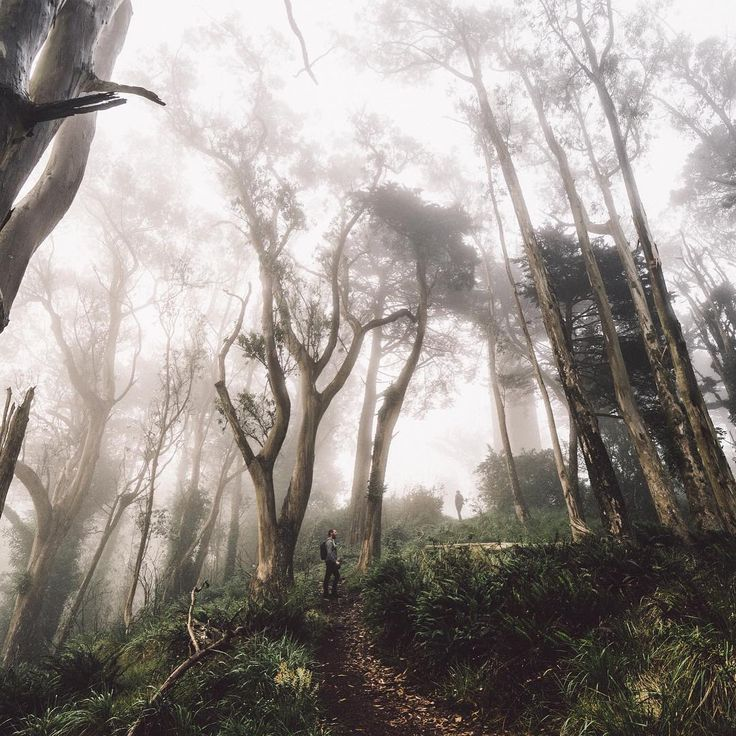 Lost In Thought в Instagram: «- lost in fog - the best part of traveling is always catching up with friends. stoked to have shared this strikingly foggy morning with @samuelelkins & @thesamgraves! p.s. for anyone in SF - I'll be catching sunrise tomorrow morning at pier 14 in Embarcadero with some friends. I know it's last minute but would love to see/meet everyone! I'll be there at 5:45 am () and gonna wonder around the financial district after. Come join us!»