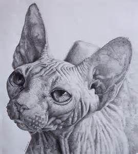 sphynx kitten art - LinuxMint Yahoo Image Search Results