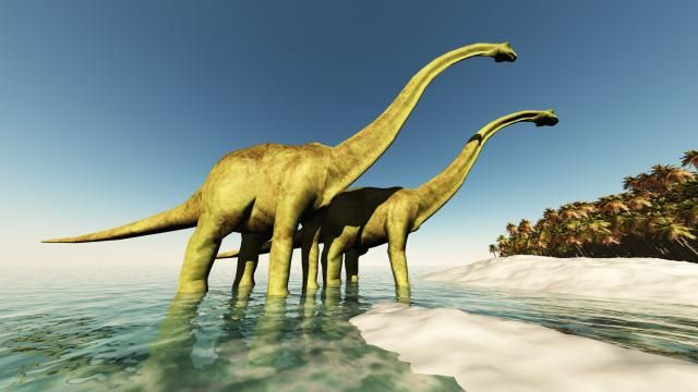 Langnek-dinosaurussen dankten reusachtige lengte aan 'zigzagbotten'  | NU - Het laatste nieuws het eerst op NU.nl