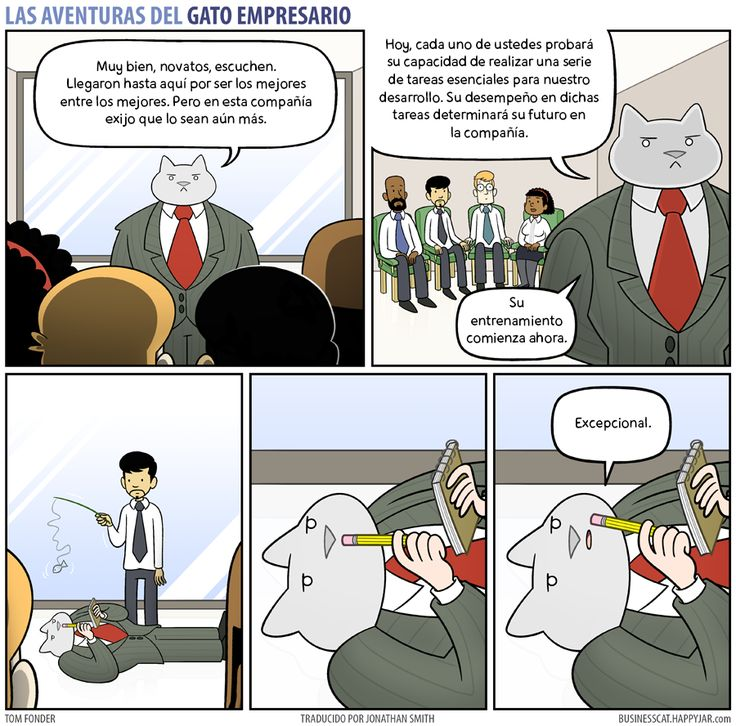 Business Cat - Entrenamiento