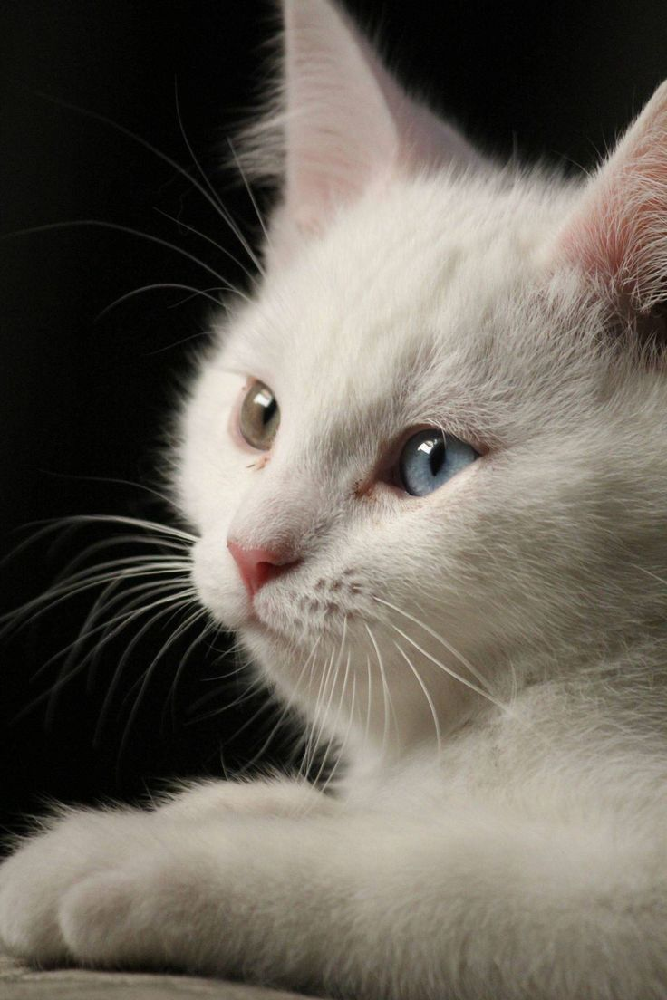 ANIMAUX : chats 1 -CATS