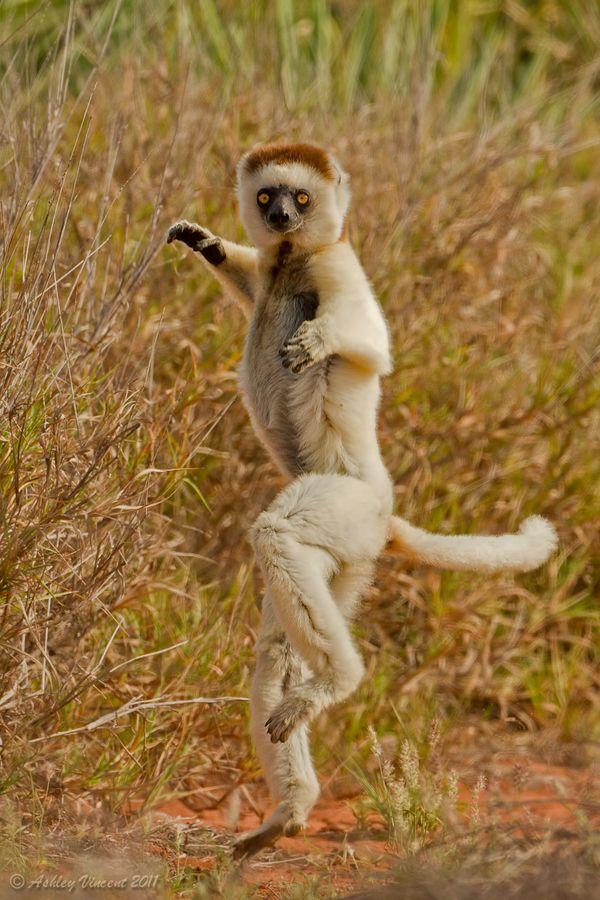 je danse je danse je danse...