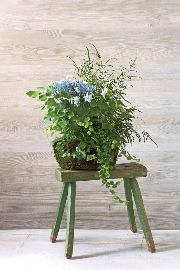 17 best CONTAINER GARDENS images on Pinterest | Container garden ...