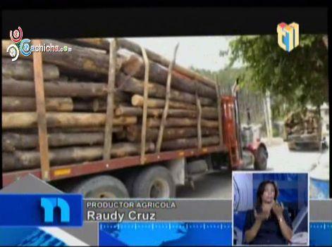 Incrementa La Tala De Árboles Y Depredación De Bosques En El Valle De Constanza #Video