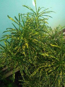 f1e6ef373c95e807dc241d2ae8be9b99 Palm House Plant With Yellow Flowers on vine plant with yellow flowers, broadleaf plant with yellow flowers, succulent plant with yellow flowers, fern plant with yellow flowers,