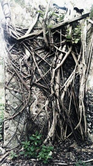 Hacienda por tahmek Yucatan. La naturaleza ganando el espacio perdido