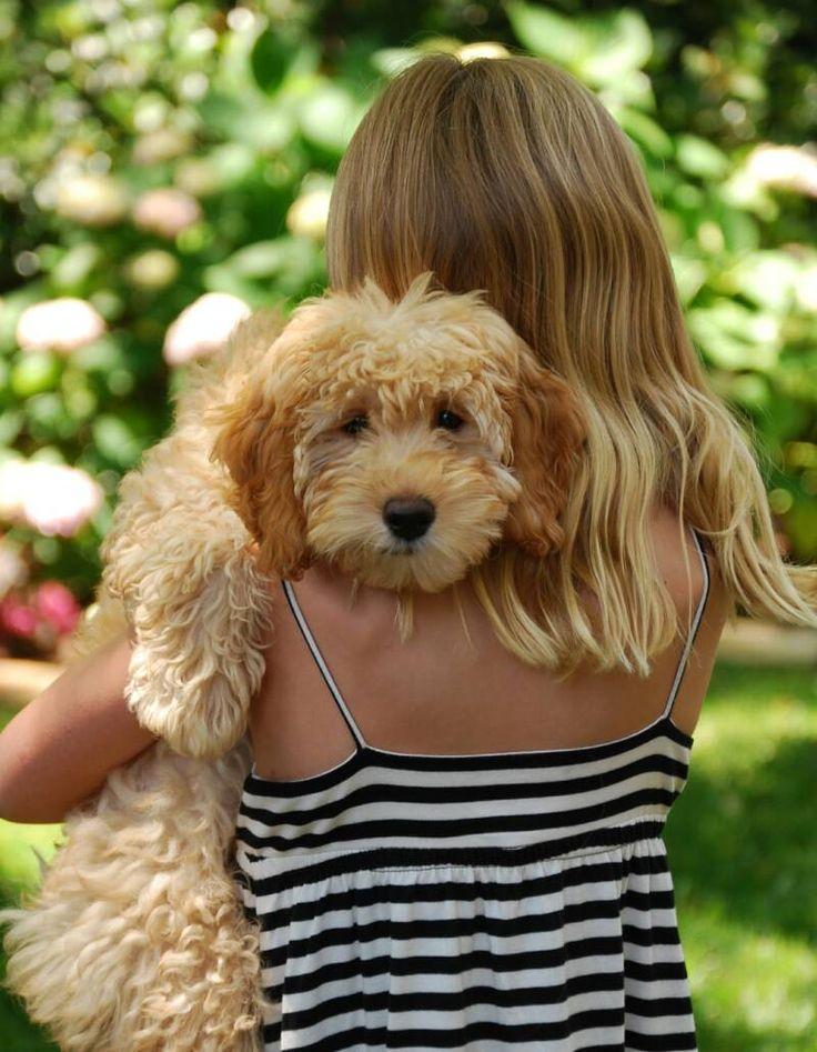 Golden doodles love to hug