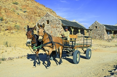 Donkey carts transport the luggage of the guests to the bungalows.