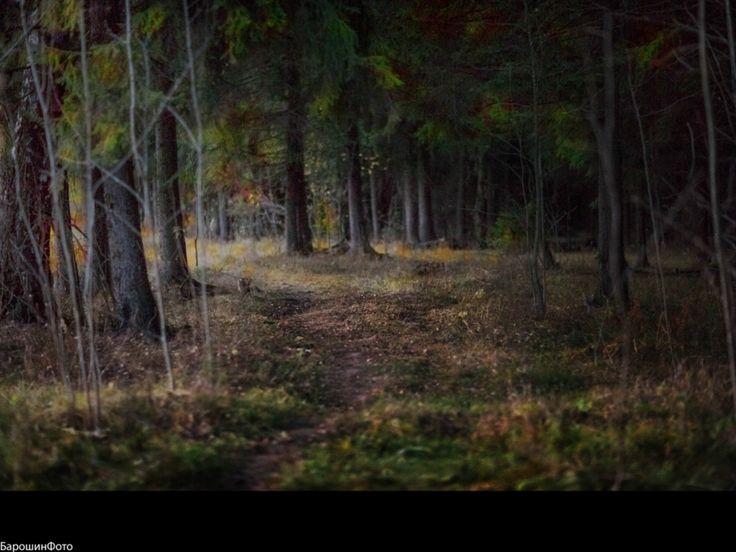 ночь лес