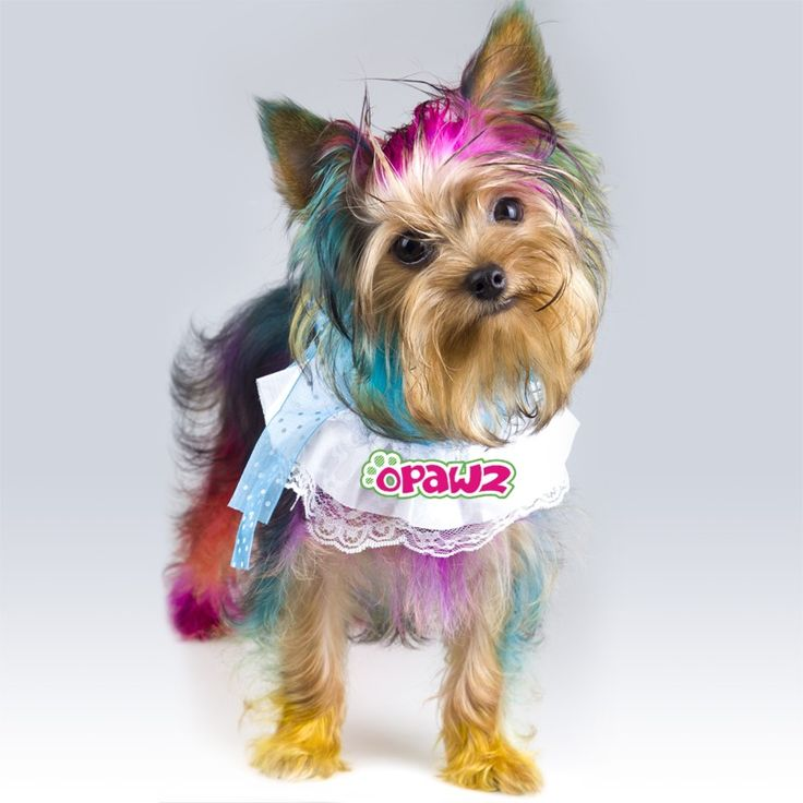 Best 25+ Dog hair dye ideas on Pinterest   Kool aid hair, Kool aid ...