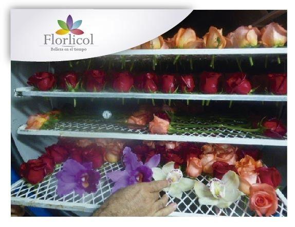 FLORLICOL Flores Preservadas de Exportación en Venta - Cursos Gratis - Todo Bolivia