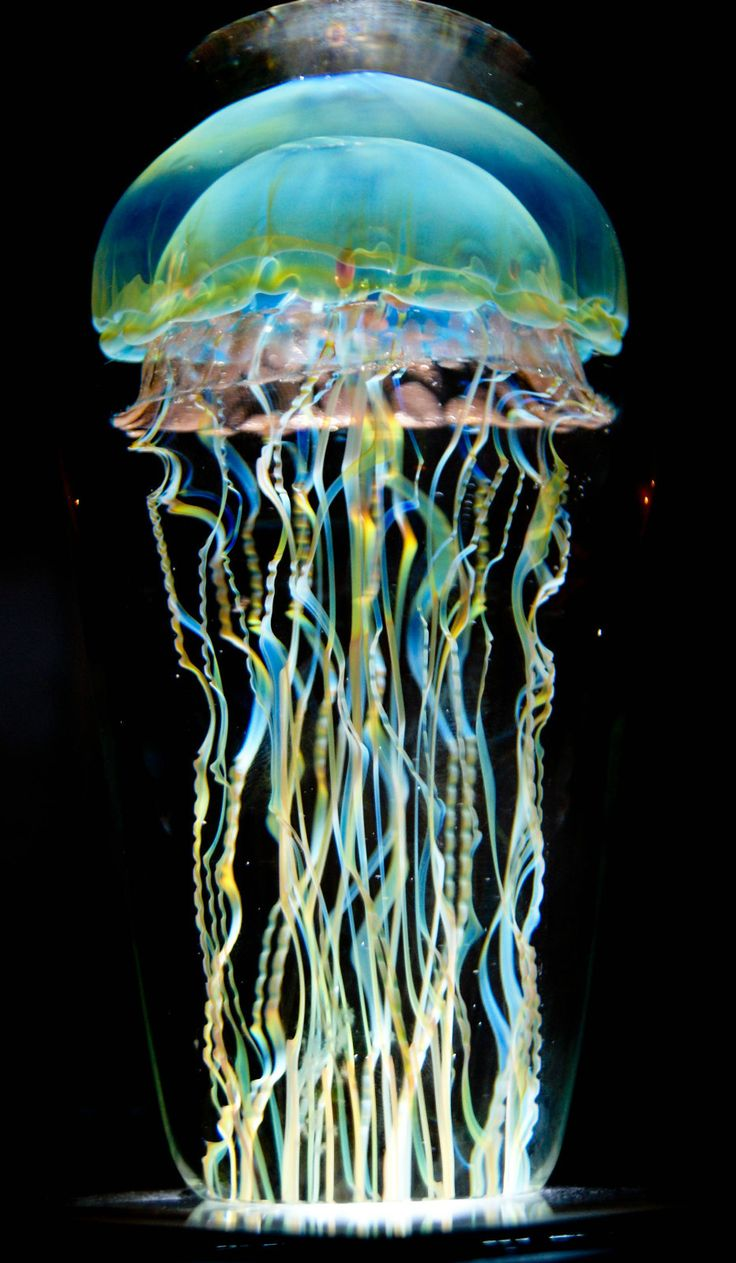 Blown Glass Jellyfish Paperweight  by Rick Satava www.thetruthhasstarted.com