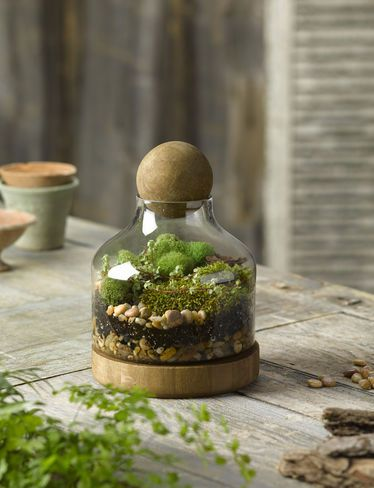 Glass and Wood Terrarium, Small